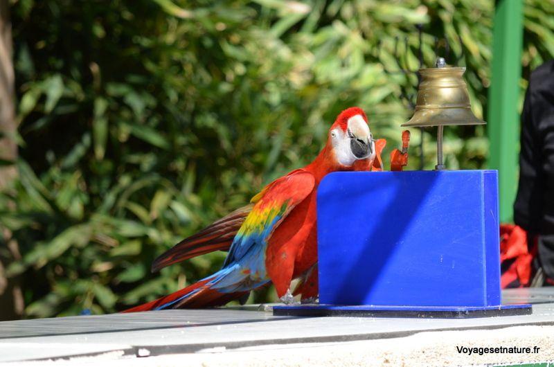 Le jardin aux oiseaux de Upie (26)