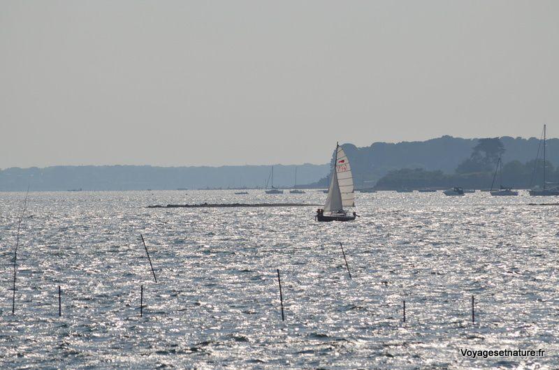 Le golfe du Morbihan (56)