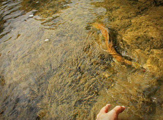 Retour au bord des rivières