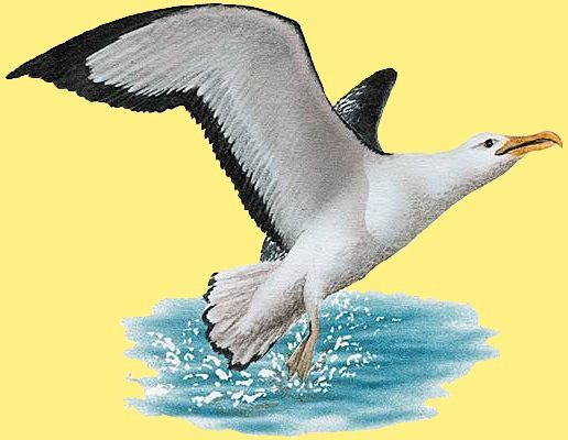 1 animal-oiseau-albatros-00-art