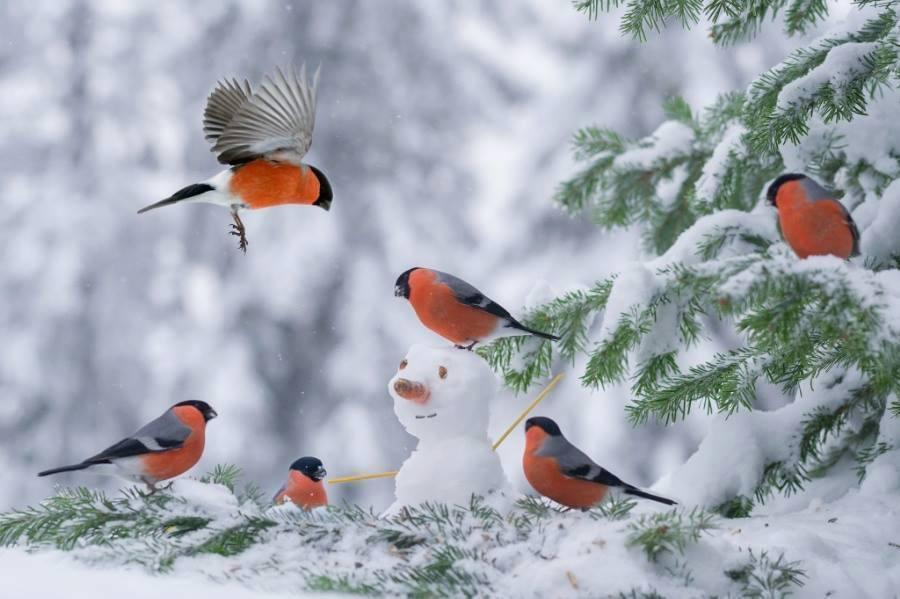 1animal oiseau hiver 245