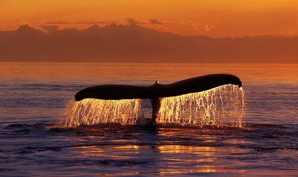 animal-baleine-29