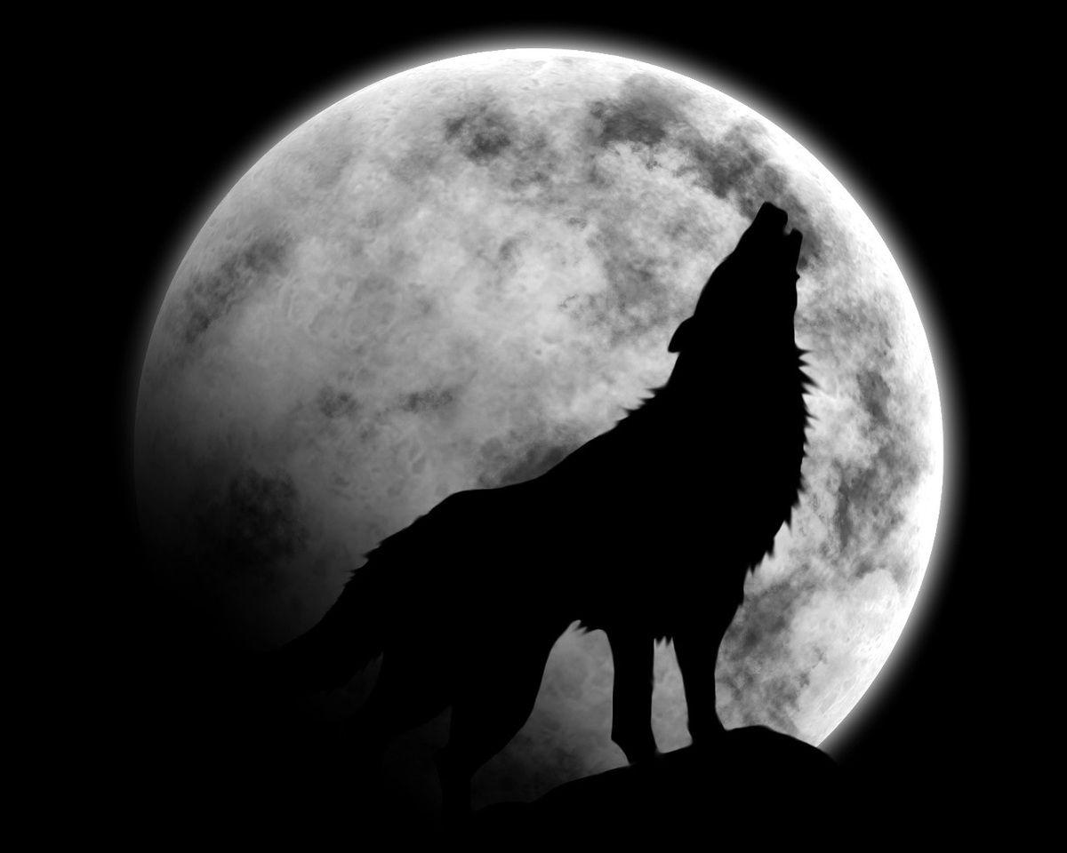 animal loup lune