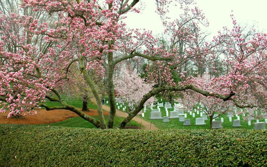 1 saison-printemps-renouveau