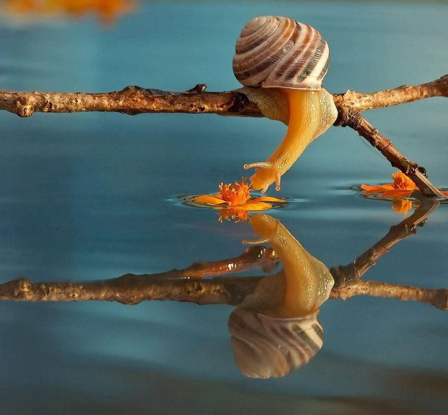 1 animal-escargot-reflet