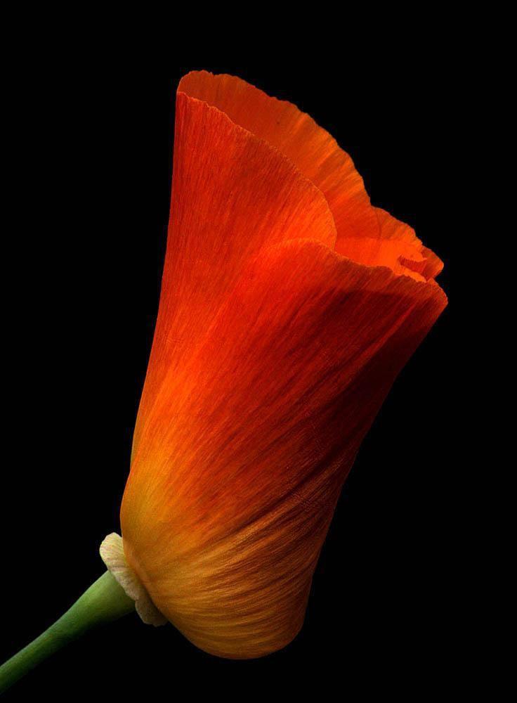 Floraison (a)