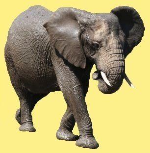 1 animal-elephant-00-art-1