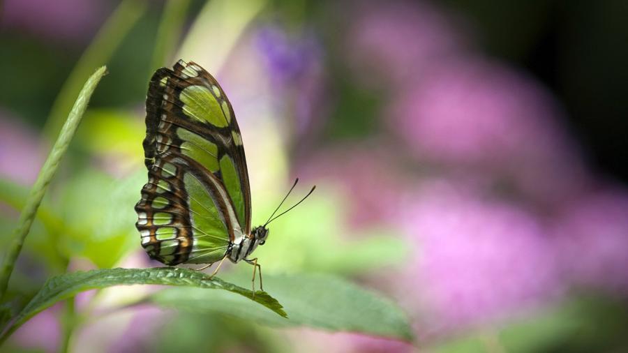 1 animal-papillon-598
