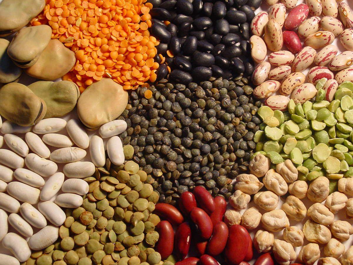 Protéines animales et végétales...