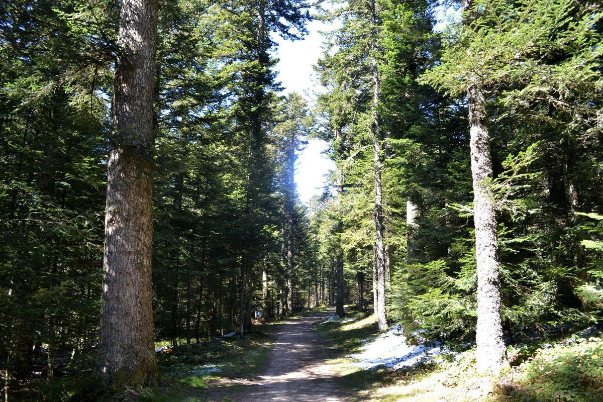 Balade en forêt à la Croix de Chaubouret dans le Pilat...