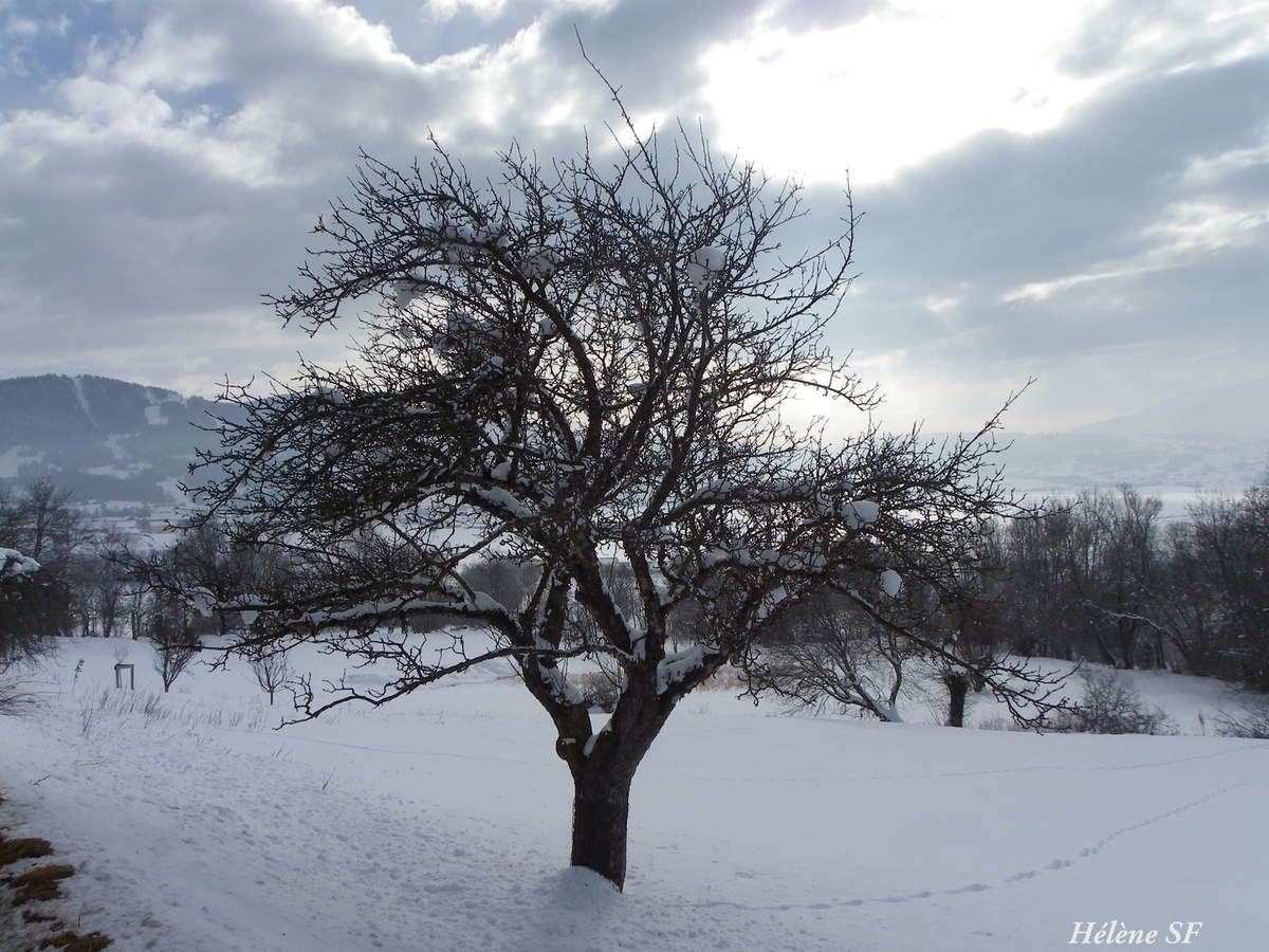 Photos minimalistes de neige