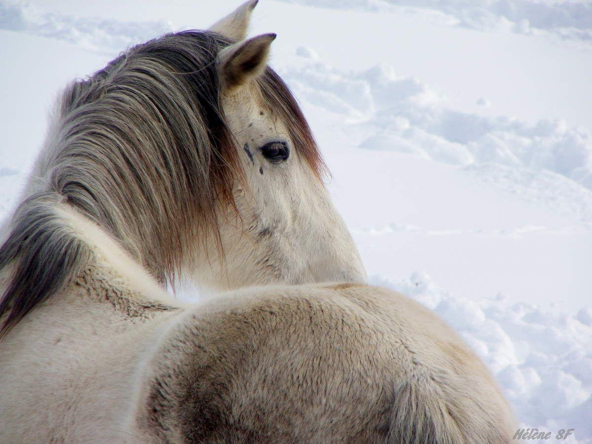 Photos de chevaux à la montagne