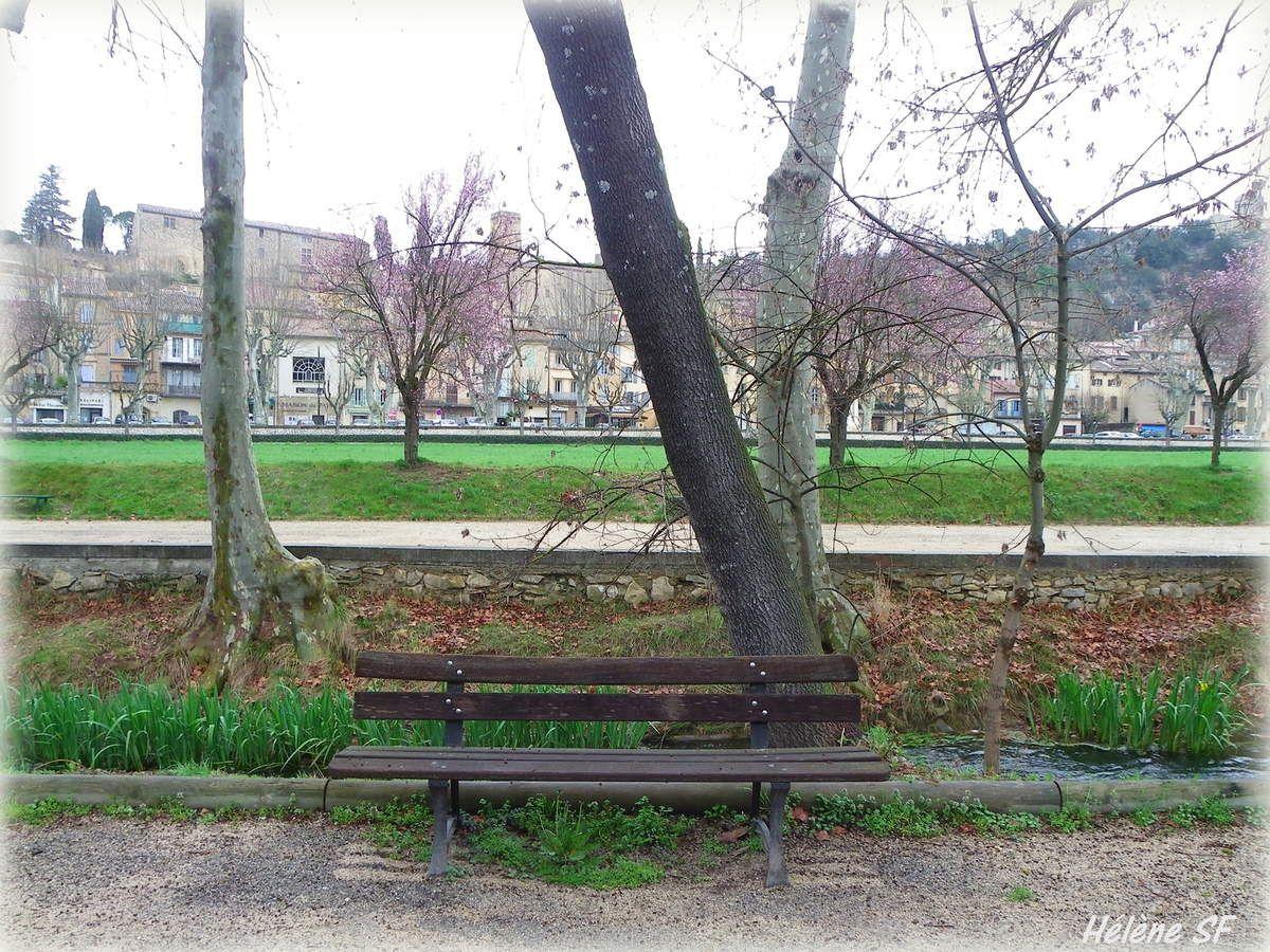 Arbres et pervenches, balade en haute Provence au début du printemps