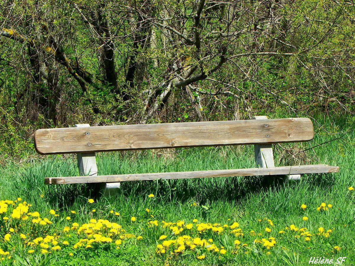 Fleurs jaunes: pissenlits et coucous, photos bucoliques