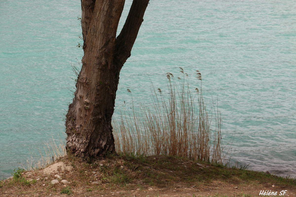 Balade fleurie autour du Lac de Peyrolles en Provence