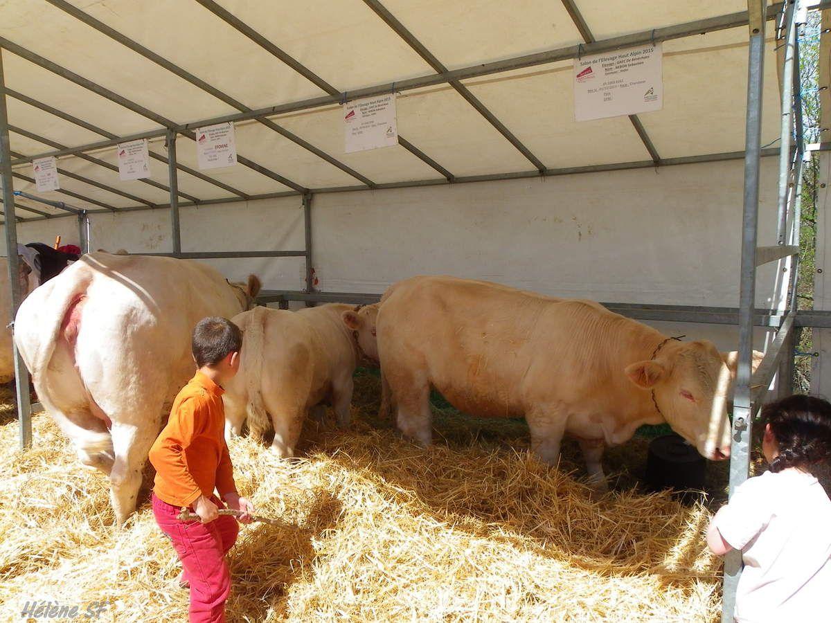 Balade au salon de l'élevage Haut-Alpin d'Ancelle