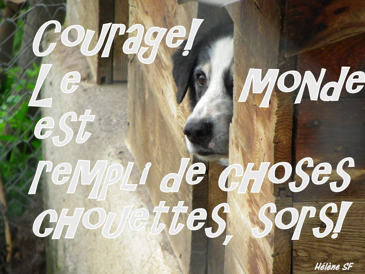 Carte gratuite Courage, sors!