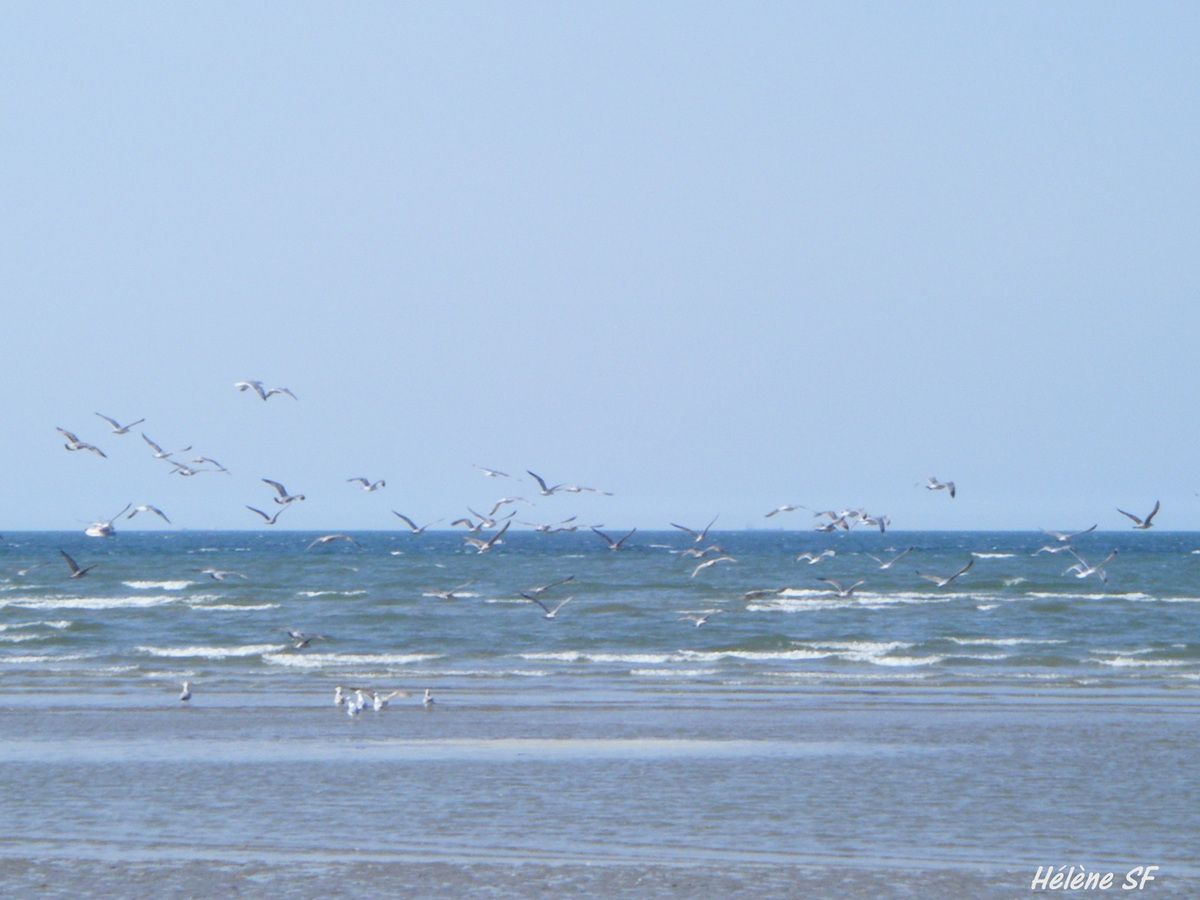 Aller se reposer en respirant l'océan