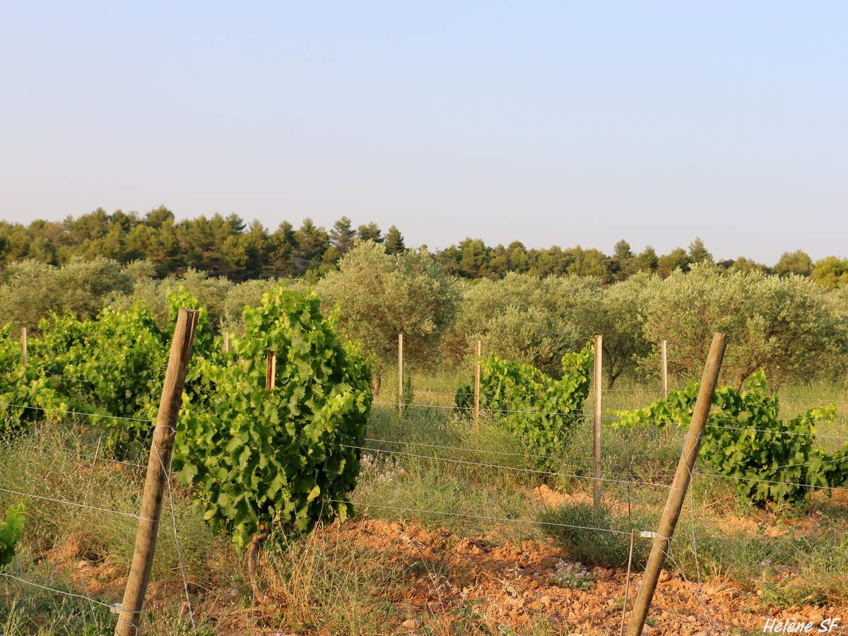 Jouques, lavandes, truffières, oliviers, balade sur le plateau de Bèdes
