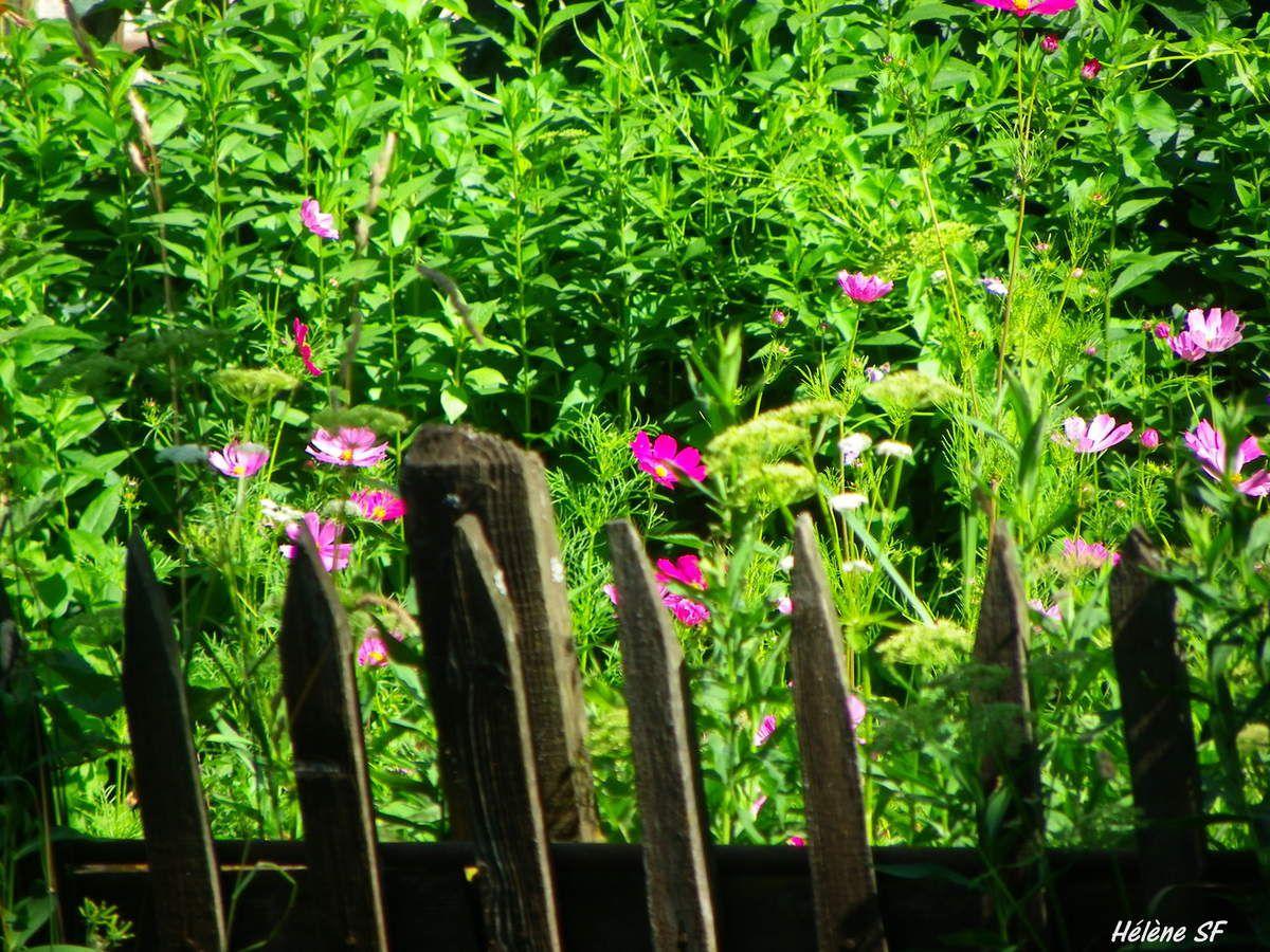 Balade bucolique à Ancelle au milieu des fleurs