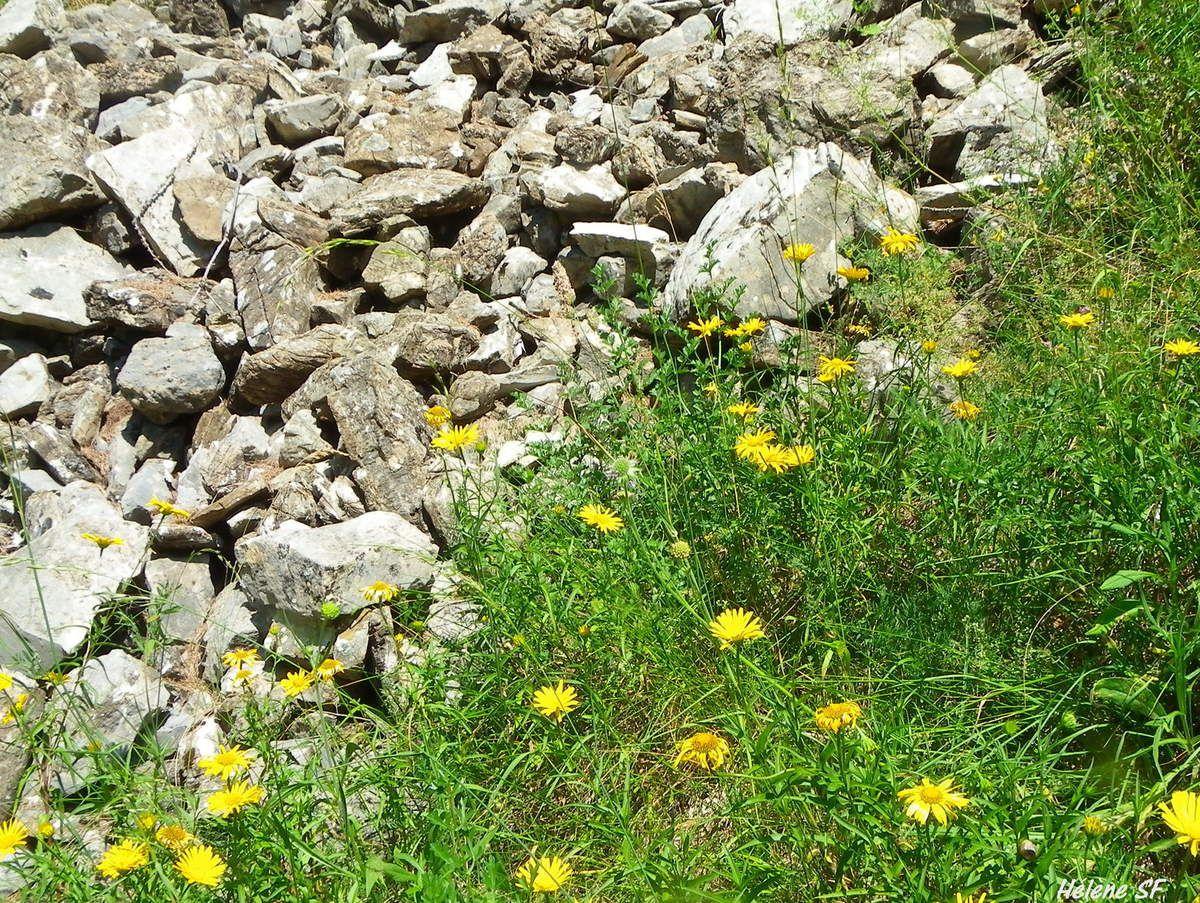 Ancelle, randonnée le long de la Roanne, via ferrata, canyoning et campanules