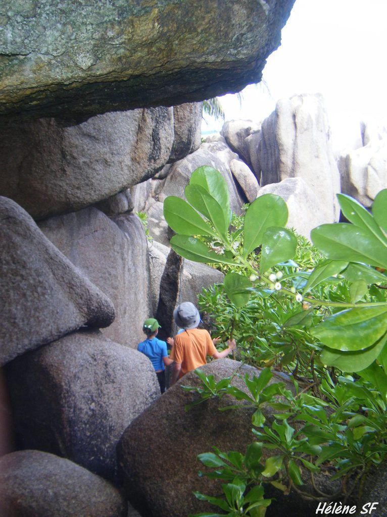 Randonnée avec nos enfants à Anse Marron, super guide et endroit exceptionnel