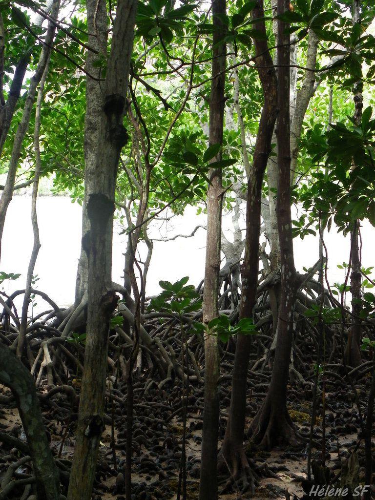 Que voir aux Seychelles? L'île Curieuse, sa mangrove, ses tortues et ses plages désertes