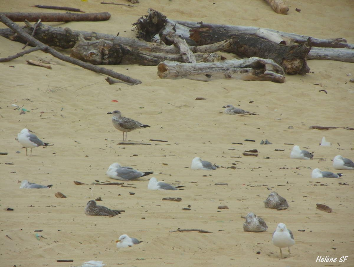Sur une plage déserte à observer les vagues et les mouettes