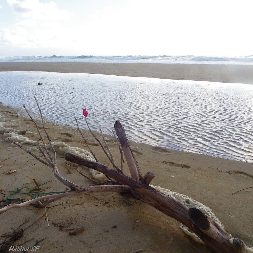 Bois flottés et océan