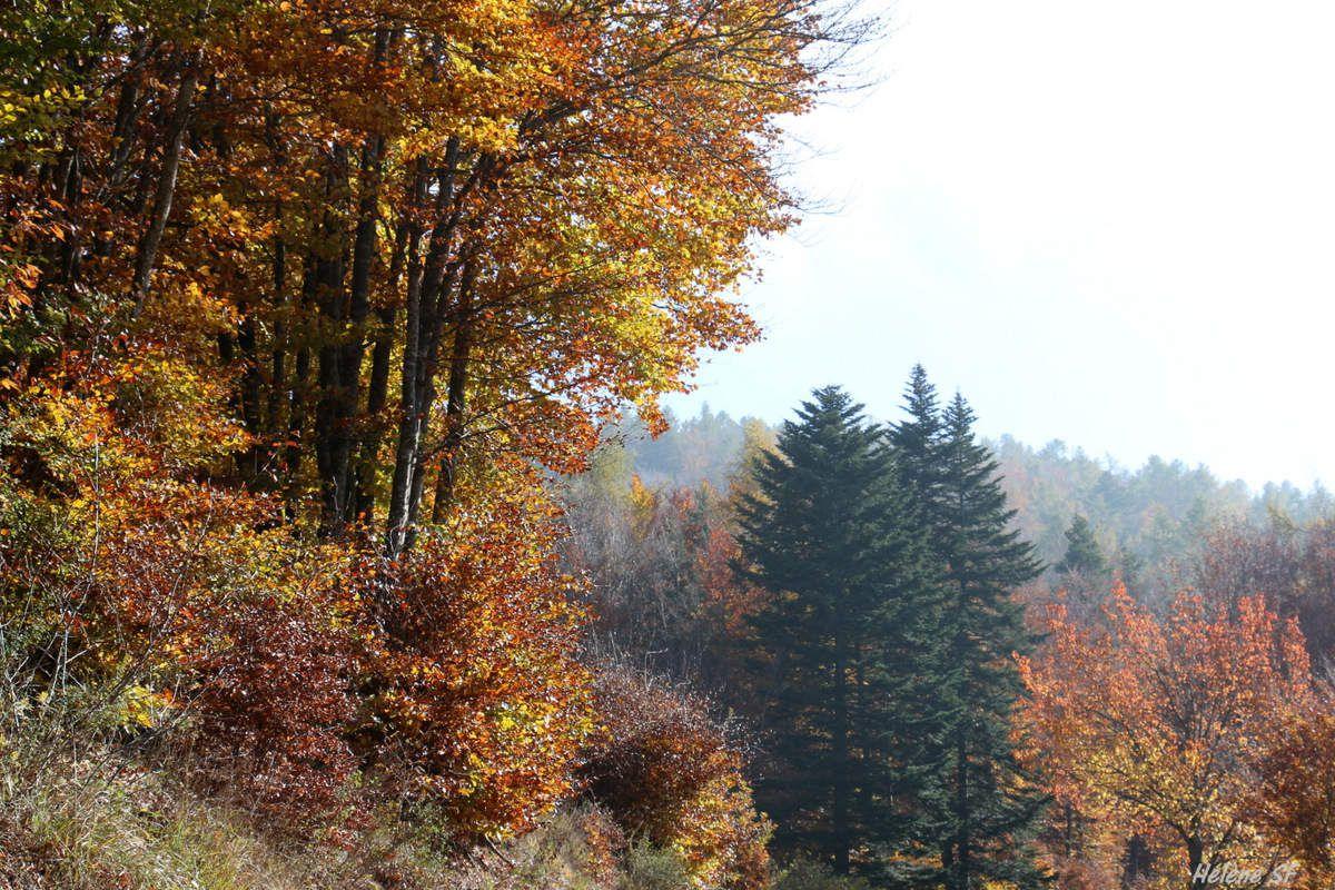 Camaïeu de roux: balade en forêt à l'automne
