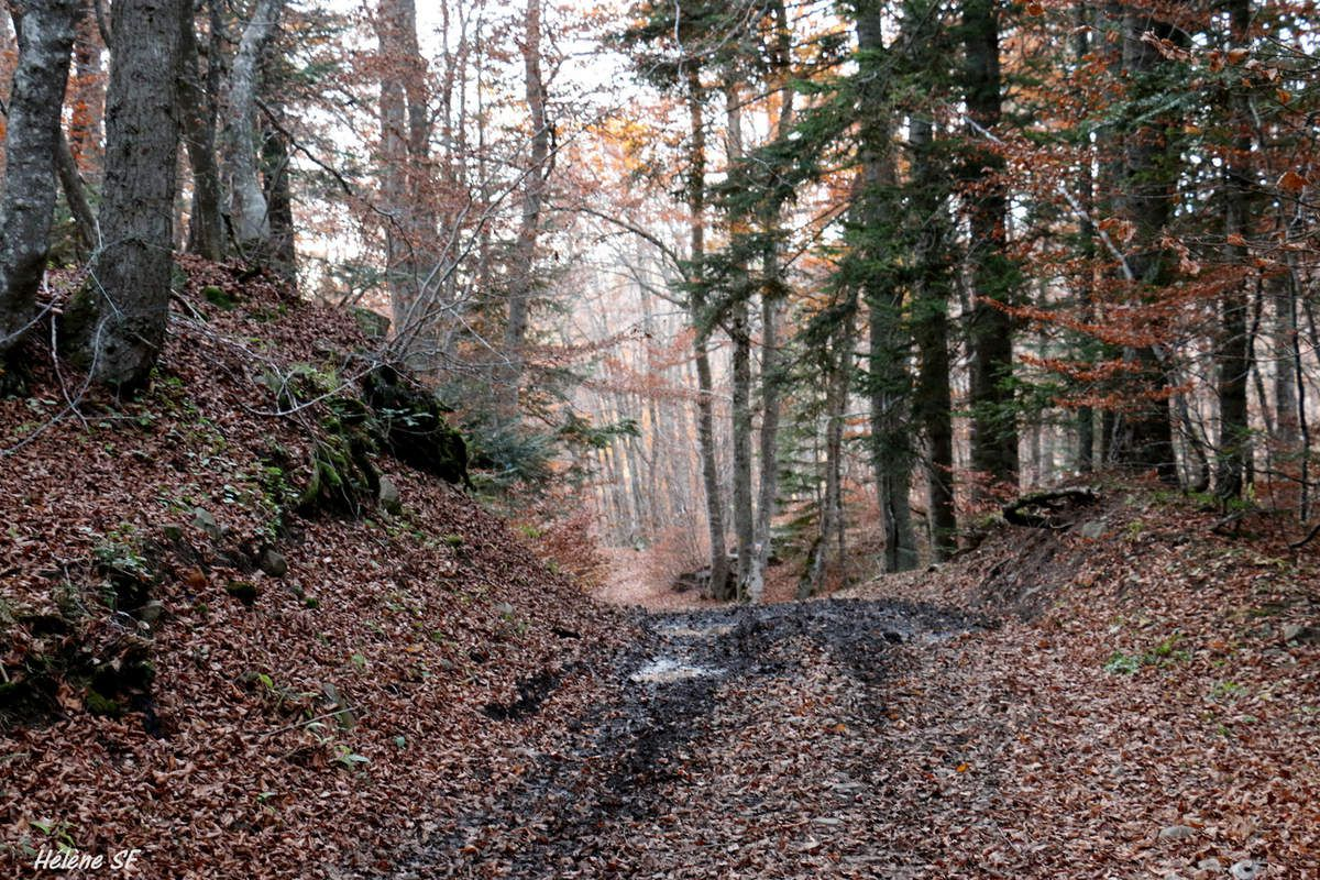 Routes, chemins et sentiers d'automne à Ancelle