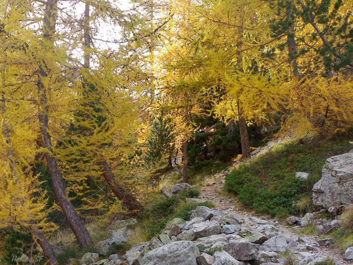 Retour par le versant exposé au sud sur un beau sentier