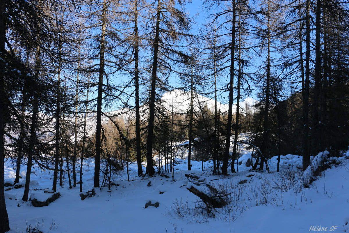 Ancelle randonnée raquettes en boucle, chevaux, biches, moraine, magnifiques panoramas et sous-bois...