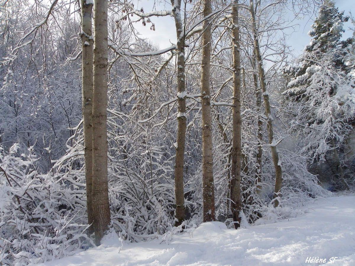 Torrent et arbres givrés en fond d'écran: balade au soleil d'hiver le long de la Rouanne