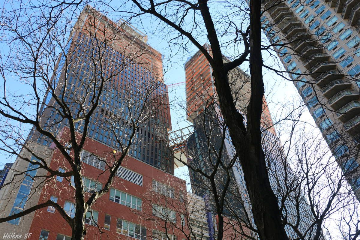New York: rencontre avec les géants de Manhattan