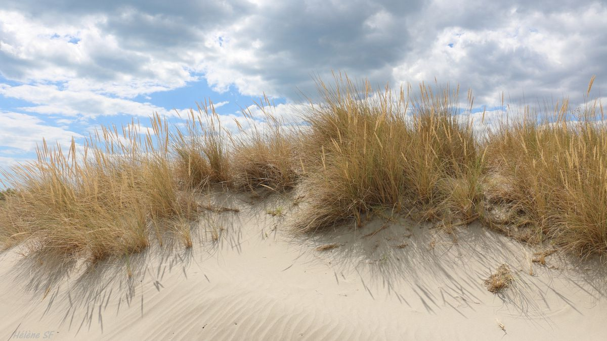 Dune, sable, impression fugitive