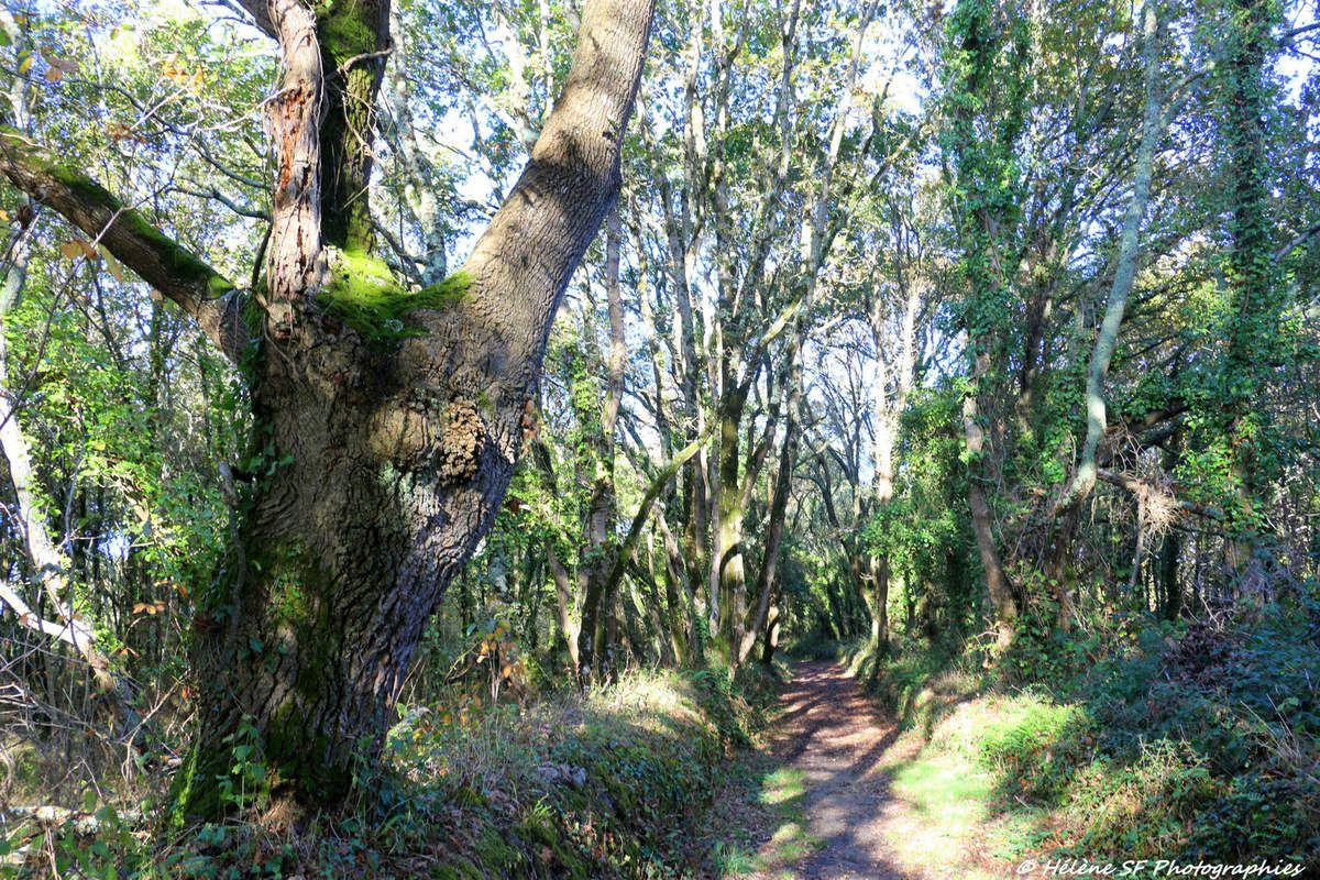 Ria d'Etel: randonnée magique en boucle autour de Saint Cado sur les sentiers forestiers et côtiers