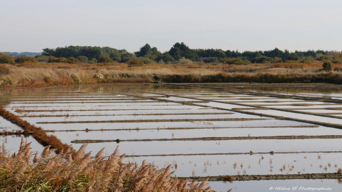 Balade douce en images reposantes dans les marais de Guérande à l'automne