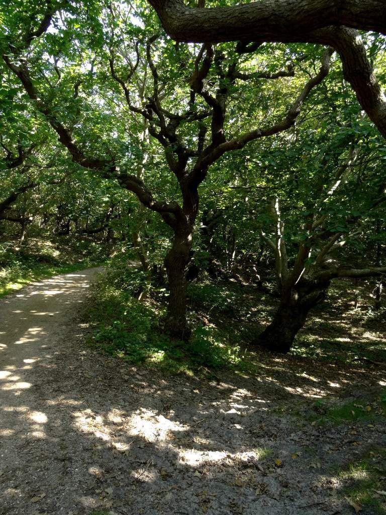 La piste en forêt
