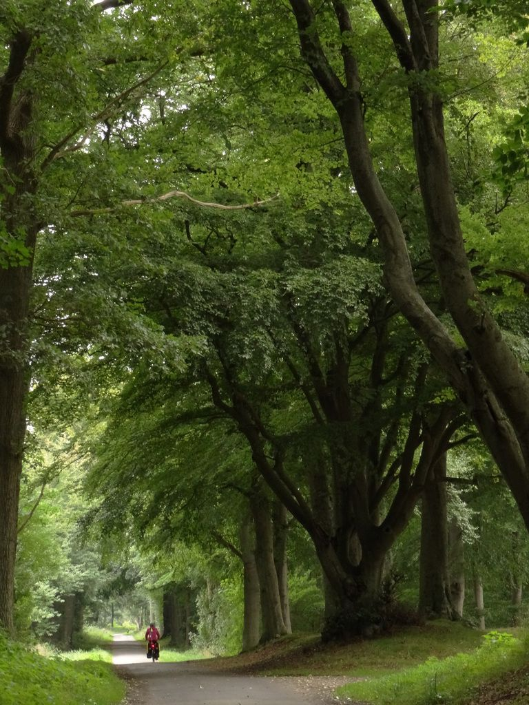 Encore une très belle forêt !