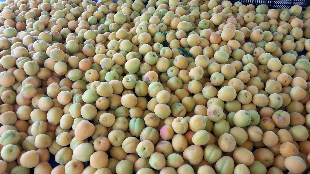Kirschen, Aprikosen.......fruchtig und bunt