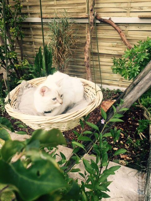 catio-patio-pour-chats-construire