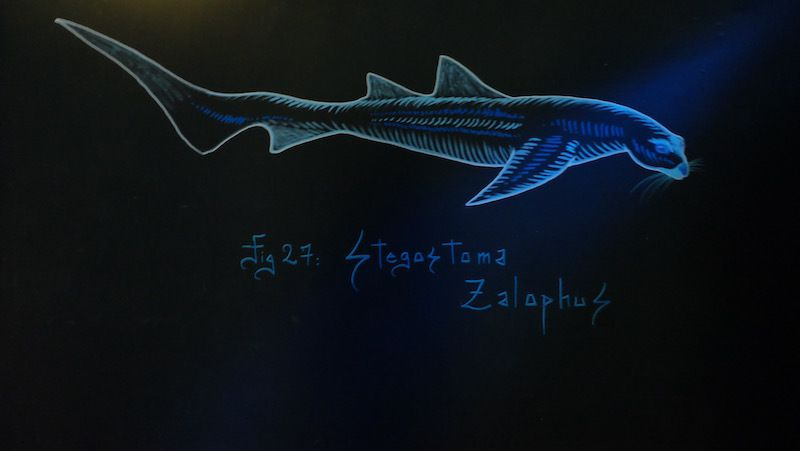 Quand la faune aquatique voisine avec le fabuleux bestiaire de Codex Urbanus à l'aquarium de Paris