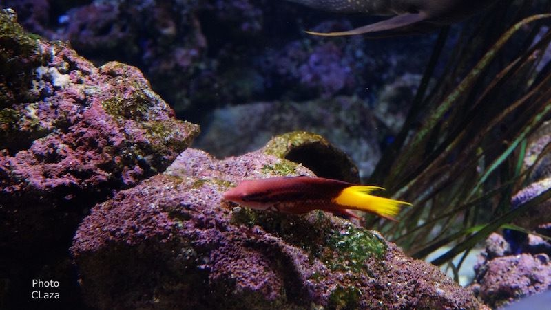 Encore un petit tour à l'aquarium de Paris à la rencontre du bestiaire de Codex Urbanus