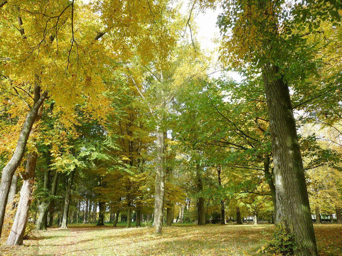 Jardin de la Paix Halluin - Couleurs Automnales Octobre 2015.