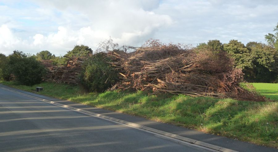 Entretien des berges halluinoises : arbres coupés le long du chemin de halage.
