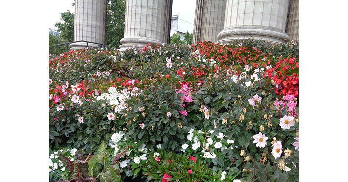 L'oasis fleurie des marches de l'église de la Madeleine