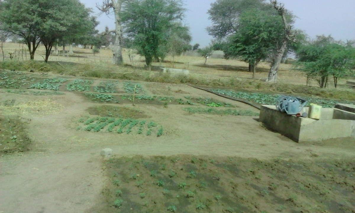 118 Jardin au Sénégal
