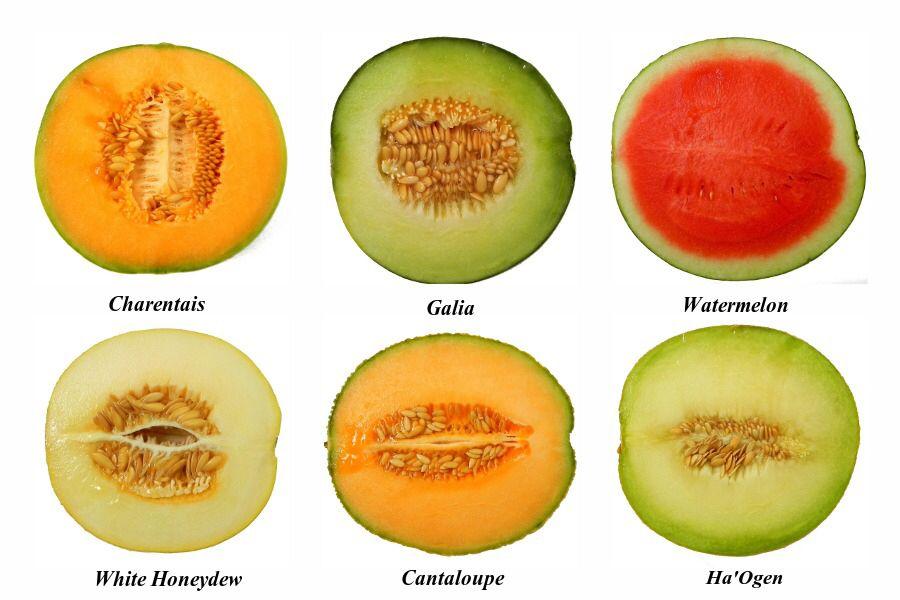 C'est le moment du melon. Peut calorique avec VieForme