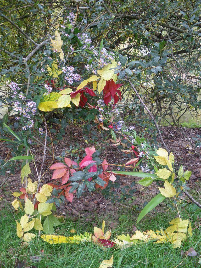 Couleurs éphémères de l'automne